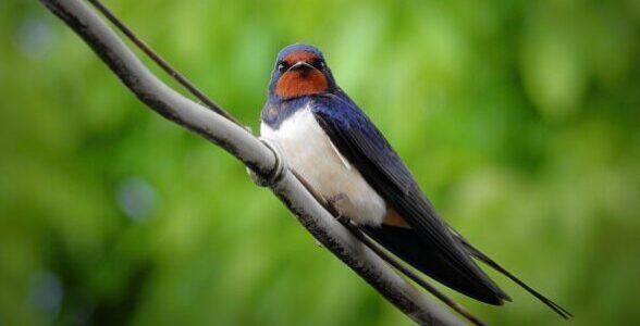 swallow-3439543_1920